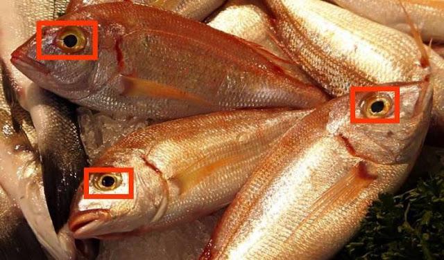 شاهد كيف يمكنك التمييز بين السمك الطازج والسمك القديم! شاهد الفيديو! طريقة سهلة للغاية!