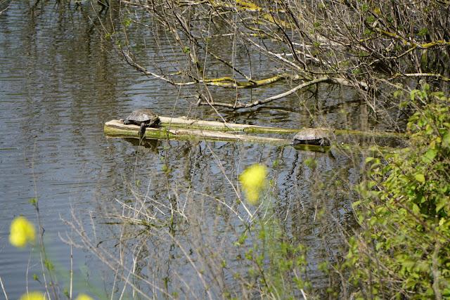 מאגר גלעד צבי מים