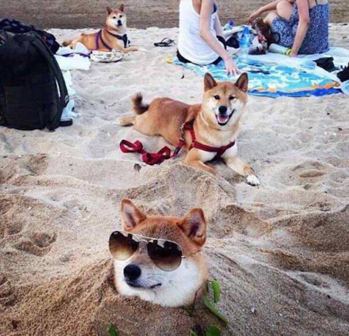 Chủ sao chó vậy - hình ảnh hài hước