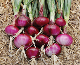Pengertian Perkembangbiakan Vegetatif dan 10 Contoh Tumbuhan Yang Berkembang Biak Dengan Vegetatif