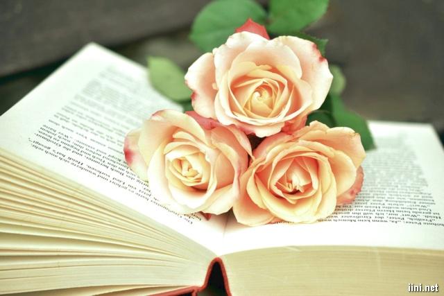 ảnh 3 cành hồng trong trang sách cũ
