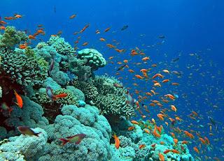 اجمل صور من اعماق البحار والمحيطات - Beautiful Wallpaper