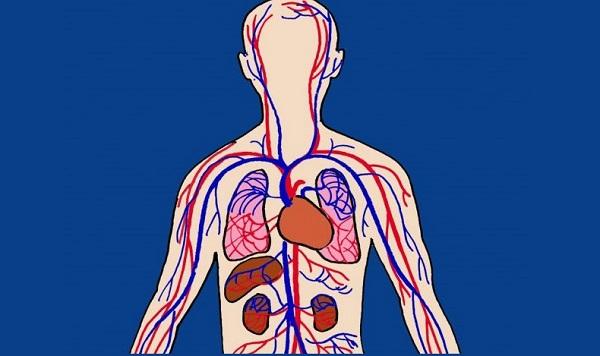 49 εκπληκτικά στοιχεία για το ανθρώπινο σώμα - ΤΑ ΜΠΟΥΛΟΥΚΙΑ ®