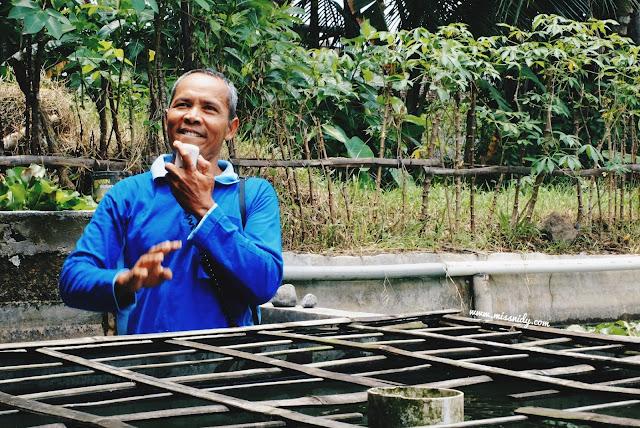 budidaya ikan dengan sistem booster di desa malangan