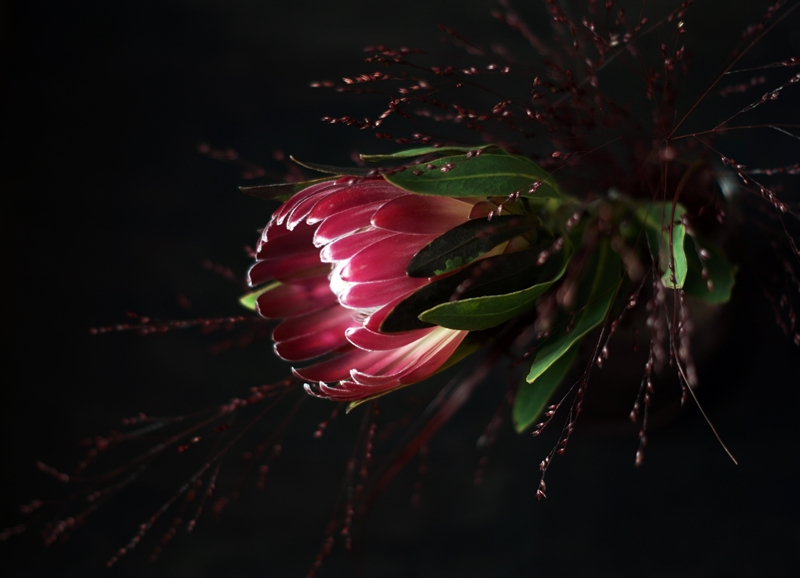 Blog + Fotografie by it's me! - Protea
