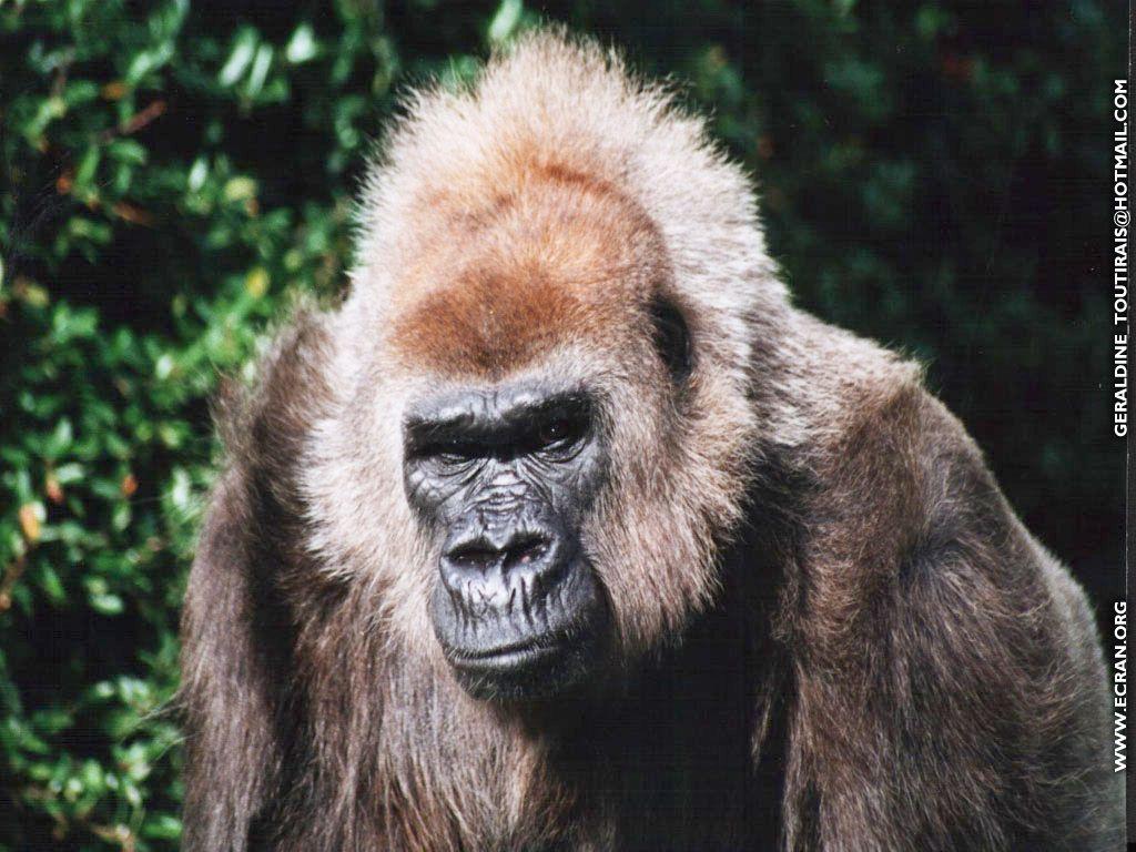 Fond d 39 cran animaux hd gratuit fond d 39 cran hd - Images d animaux sauvages gratuites ...