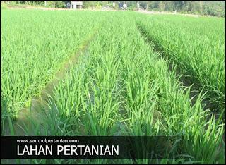 5 Faktor penyebab berkurangnya lahan Pertanian