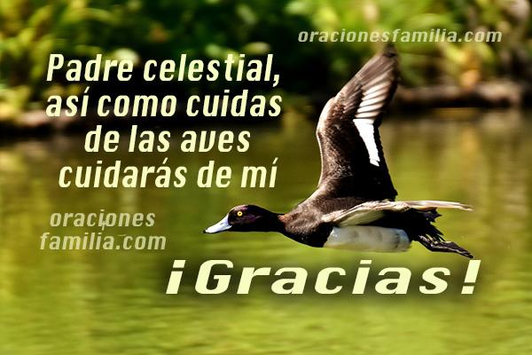 frases oraciones de la mañana, Dios nos cuida como cuida a las aves gracias a Dios