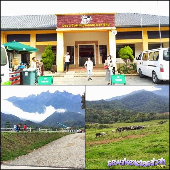 desa dairy farm kundasang,