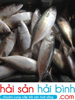 Cung cấp, bán cá biển tươi ngon giá sỉ lẻ tại Hà Nội