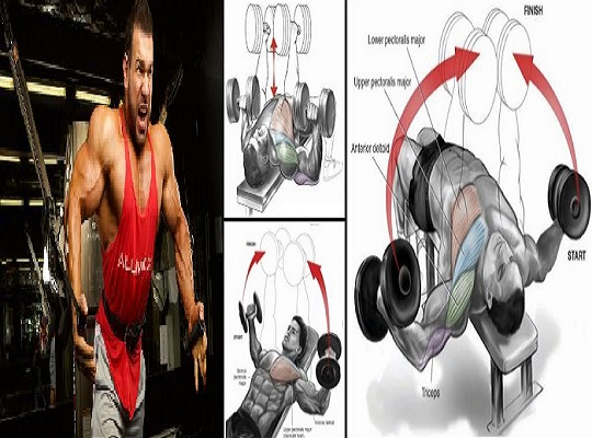 chest workout Routine For Mass - Exercise in 1 a Week