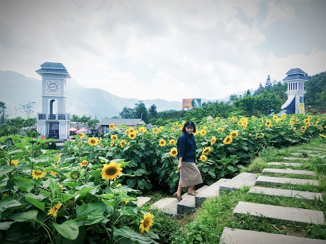 New Stunning sunflower fields in Fansipan Legend, Vietnam 1