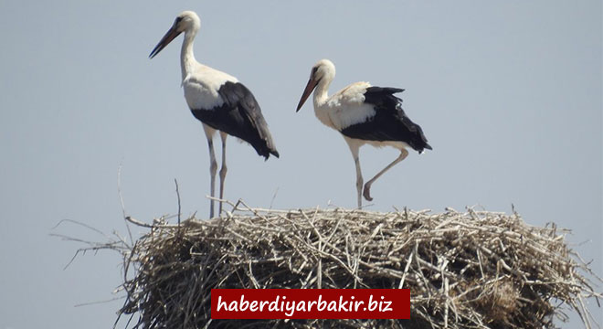 One of the most important stork colonies in the world is located in Diyarbakır