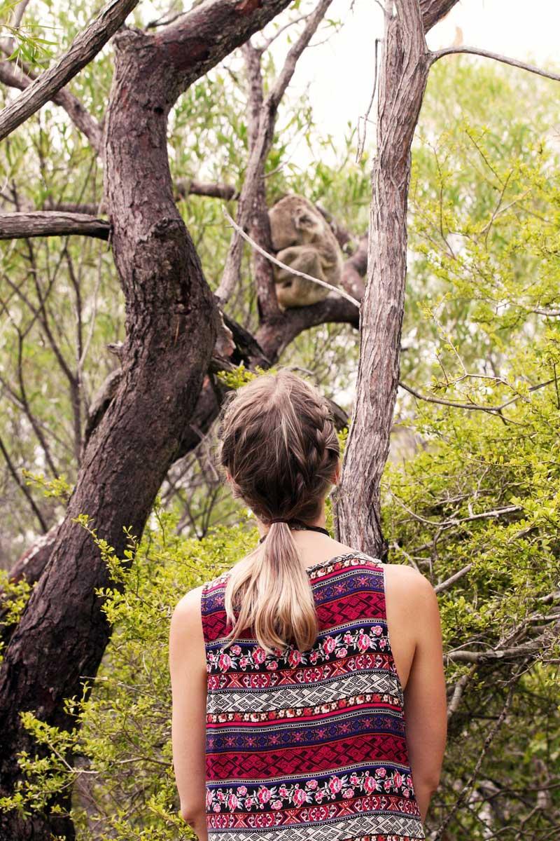 finding wild koalas on magnetic island