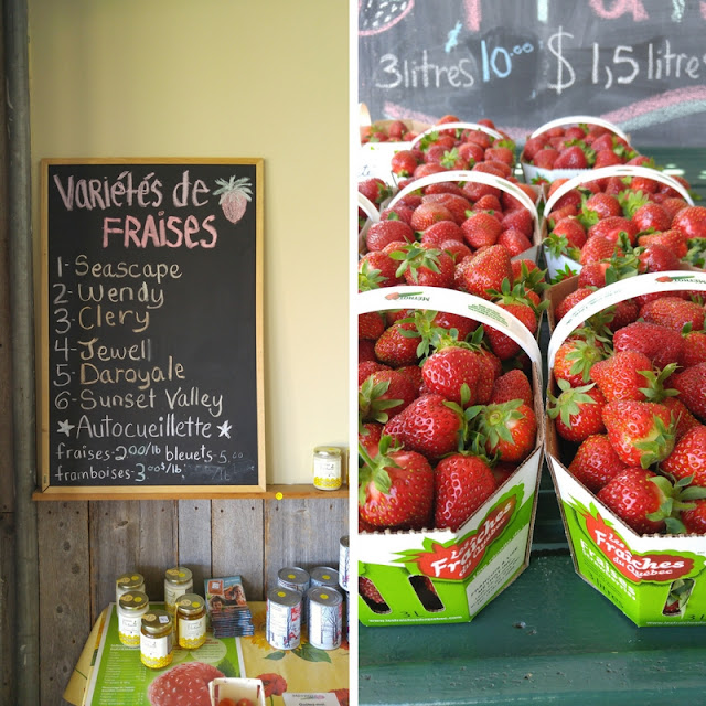 raspberry, ferme methot, autocuillette, fruit pick
