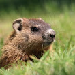 It's Groundhog Day - Time to Change Your Glucose Monitoring Routine