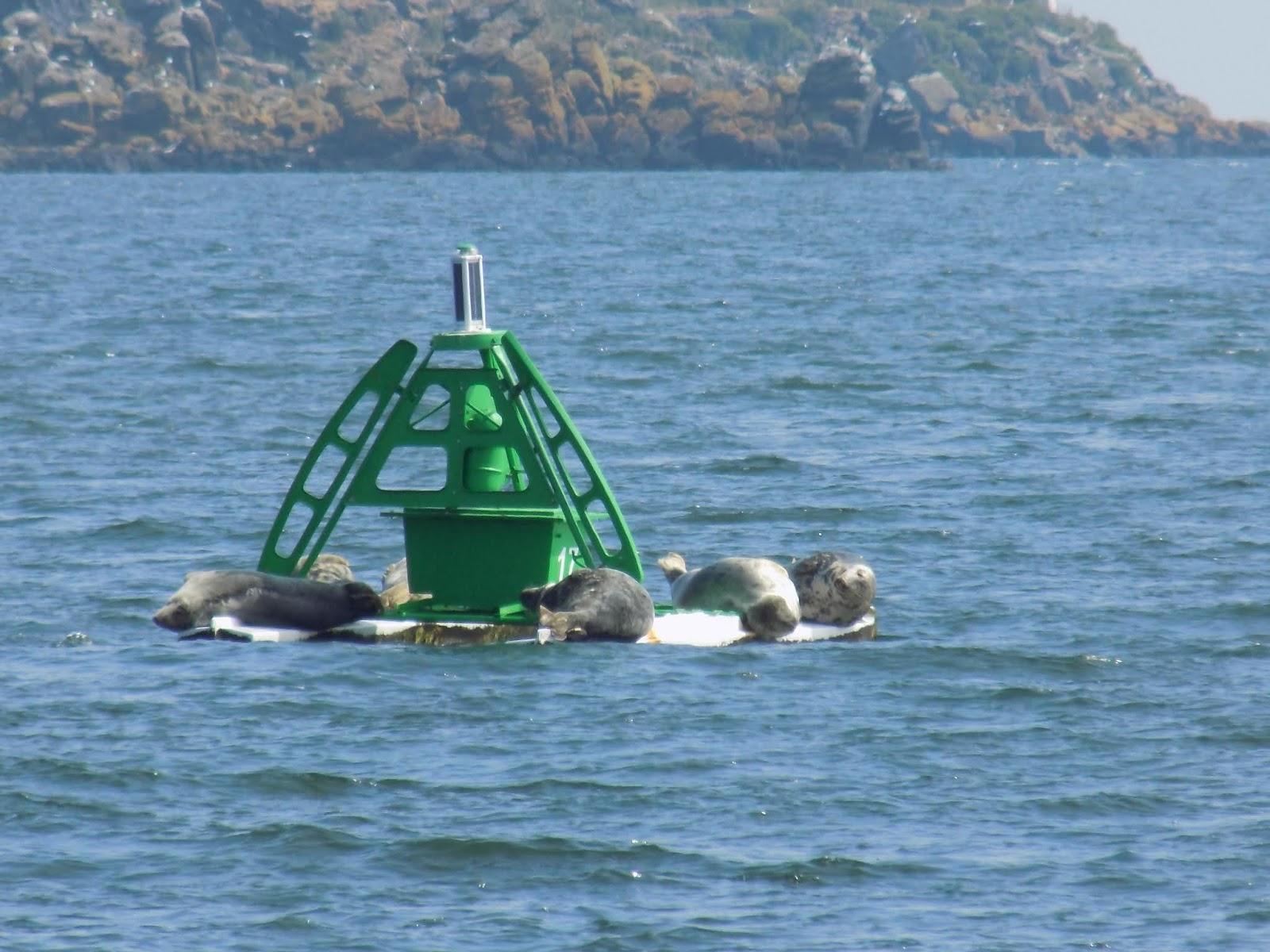 Incholm Island Ferry