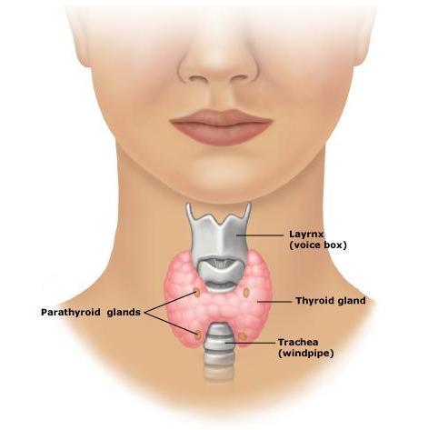 Como se ve el pecho redondo después de la operación