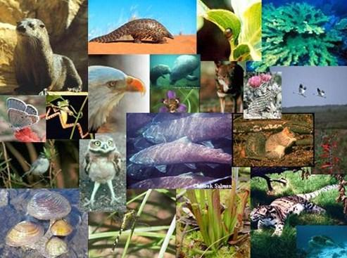 Langkah Pengelompokan (Klasifikasi) Makhluk Hidup