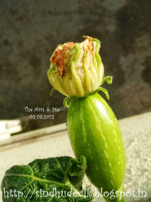 The pumpkin flower was fertilized