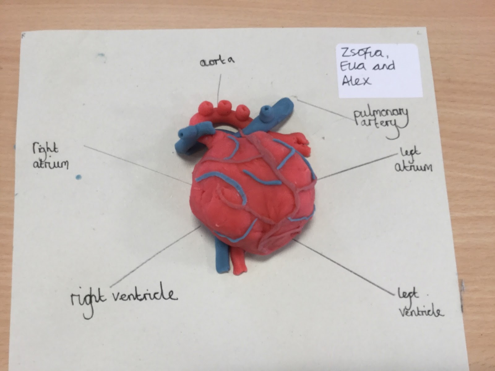 Windhill21: Year 6 Science - The Anatomy of a Heart