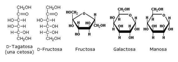 Energéticos De La Vida Estructura