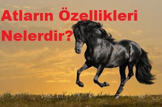 Atların Özellikleri Nelerdir?