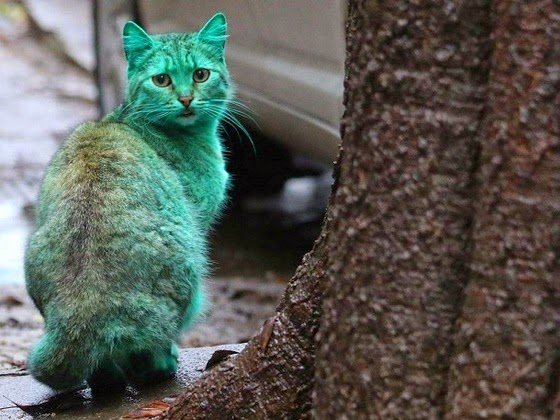 green cat bulgaria