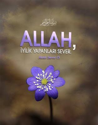 çiçek, mor çiçek, iyilik, Allah Aşkı, maide suresi 13, ayet, Kur'an