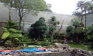 Jasa pembuatan taman murah jabodetabek | gambar taman | desain taman | ahli pertamanan | tukang taman profesional | tanam rumput | tanaman hias | pohon pelindung | pohon peneduh | tanaman perdu | rumput gajah mini | swiss | jepang | golf | gajah biasa | peking