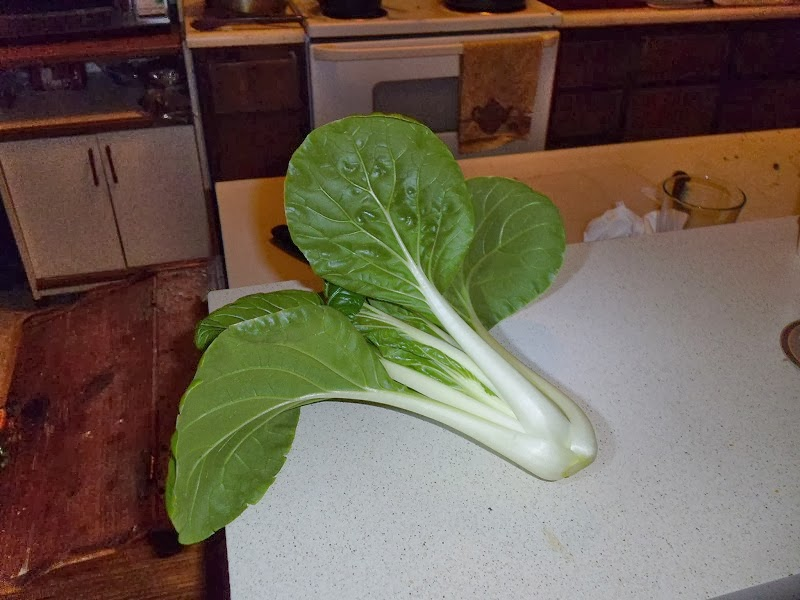 Fancy looking Bok Choy
