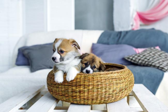 Jakie wybrać legowisko dla psa?