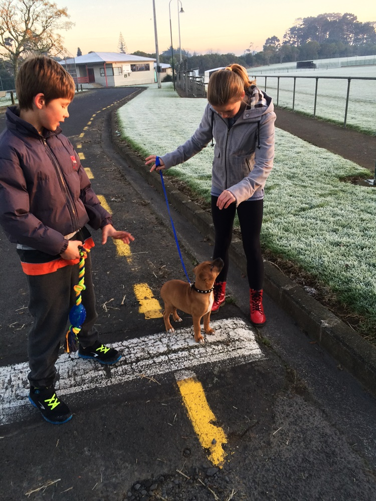 Leash training on a frosty morning walk
