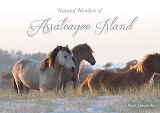 Natural Wonders of Assateague Island cover