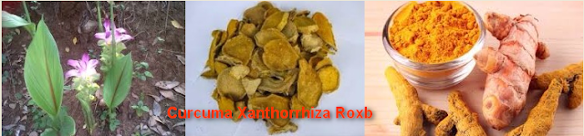 Benefit For Curcuma Xanthorrhiza For Agony Spleen | Overcoming Gallstones