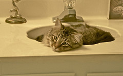 A brown cat laying in a sink