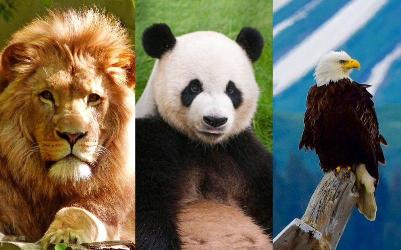 três símbolos nacionais - o leão, o panda e a águia-de-cabeça-branca