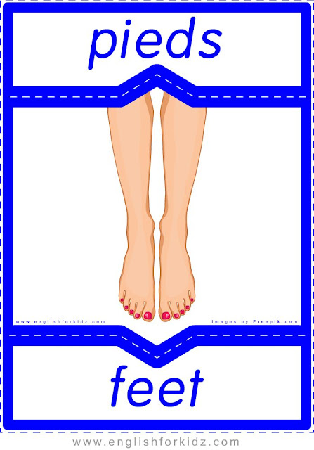 feet in French, pieds en anglais, English-French human body flashcards