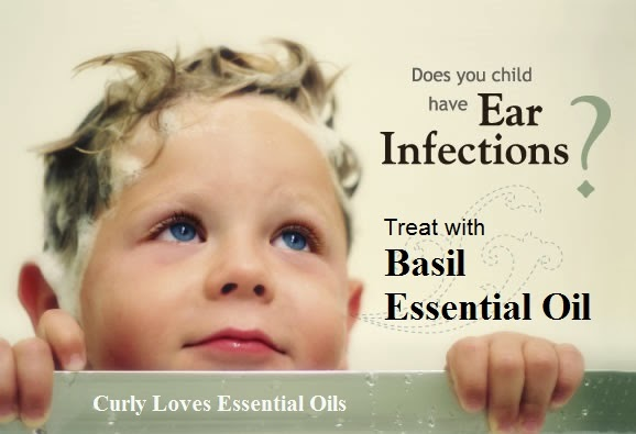 Curly Loves Essential Oils Ear Infection Treatment With Basil Essential Oil