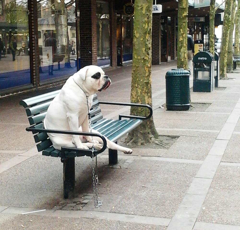 Bilderesultat for animals sitting like people