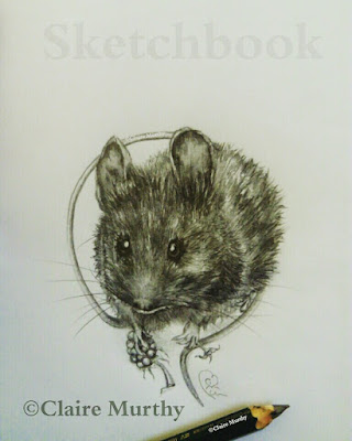 wildlife artist mouse pencil drawing
