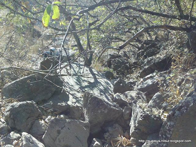 200 metros por un arroyo de temporal - buscando el Arroyo la Soledad