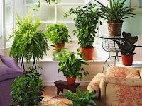 Tips Menanam Tanaman Hias Di Dalam Rumah