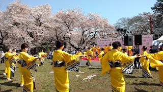 Koganei Park sakura