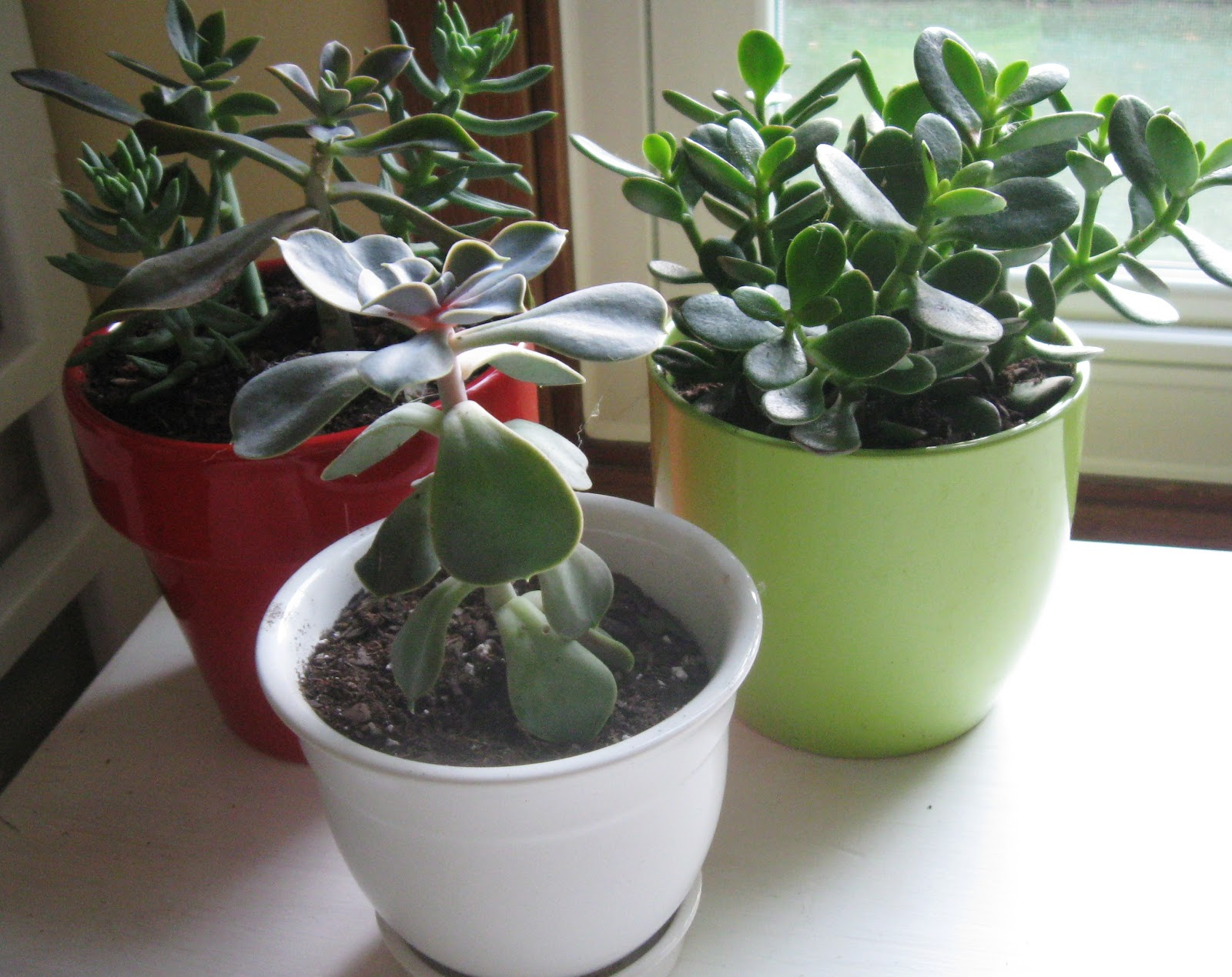 COMFY HOUSE: moving outdoor plants inside