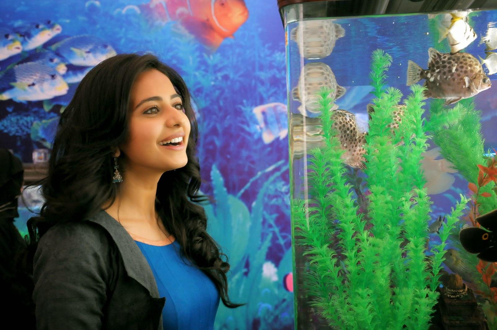 South Indian Spicy Girl Rakul Preet Singh Smiling Face Stills In Black Dress