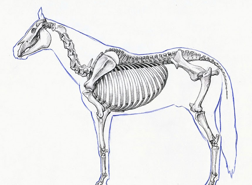 drawn today horse anatomy study. Black Bedroom Furniture Sets. Home Design Ideas