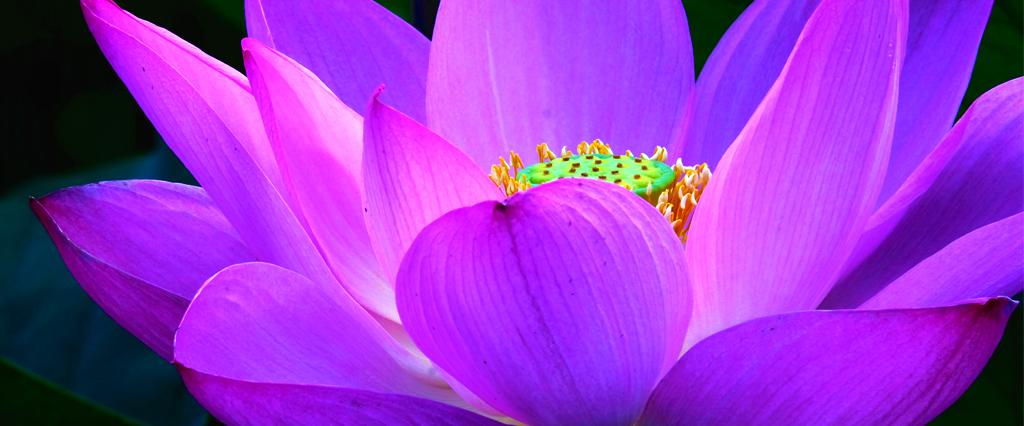 Daftar 10 Bunga Terindah Di Dunia