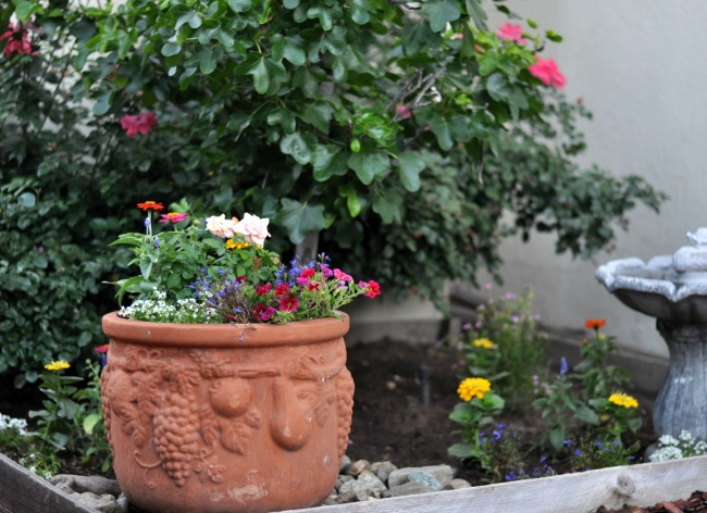 potted flowers in the cottage garden