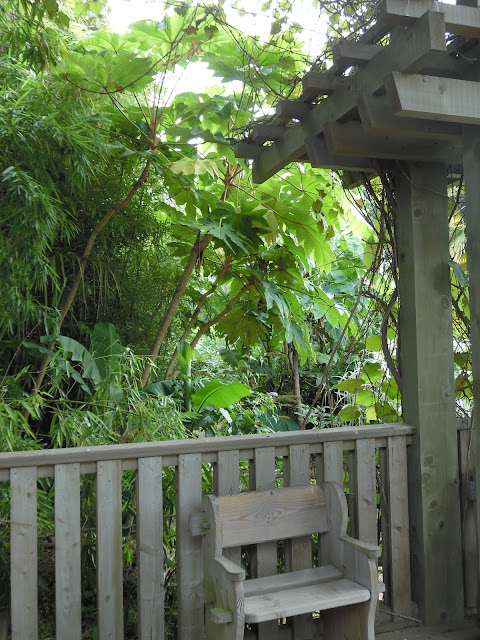drewniana pergola i ławka w ogrodzie